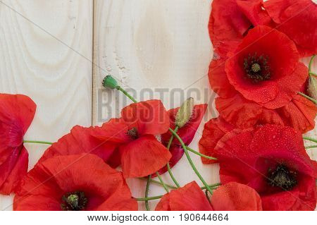 Blossoming wild poppies on a light wooden background. Wallpaper screensaver background. Spring flowers. Natural drugs. Spring flowers. Natural drugs.