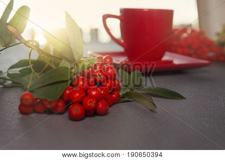 Branch of red ash on background coffee cup with a solar beam of morning on the table