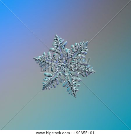 Real snowflake macro photo: small stellar dendrite snow crystal with short arms, numerous side branches and elegant symmetrical shape. Snowflake glittering on blue - gray - cyan gradient background.