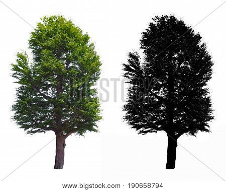 a big tree isolated on white background with alpha mask