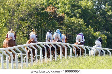 STOCKHOLM SWEDEN - JUNE 06 2017: Rear view of many jockeys riding arabien race horses forest in the background at Nationaldags Galoppen at Gardet. June 6 2017 in Stockholm Sweden