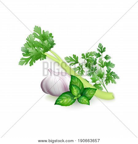Set Of Parsley, Basil, Celery And Garlic In Realistic Style