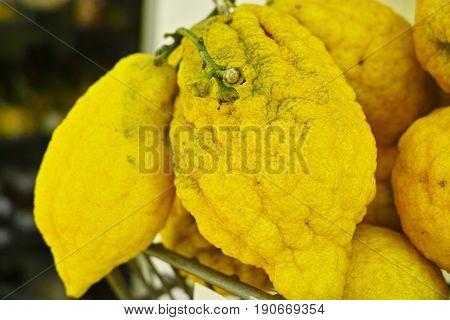 Ripe yellow Sicilian lemons ready to eat