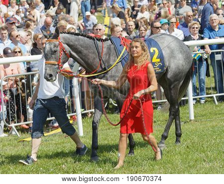 STOCKHOLM SWEDEN - JUNE 06 2017: Woman in red dress leading a gallop arabian race horse in the vault at Nationaldags Galoppen at Gardet. June 6 2017 in Stockholm Sweden
