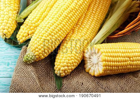 sweet corn on sackcloth half of corn some corn peeled some do not closeup