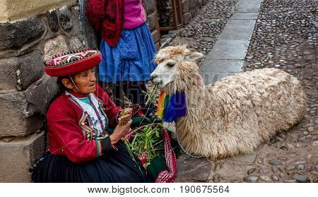 Cusco, Peru- March 16, 2017: Old Women in traditional dress feeding Alpaca in Pisac Peru