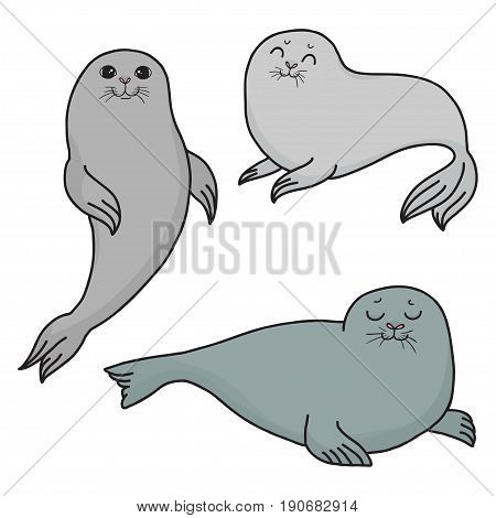 Pretty Seals isolated on white. Vector Set of marine mammal. Three seals in different poses.