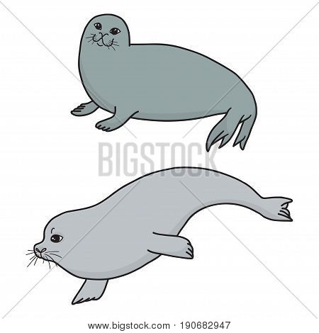 Pretty Seals isolated on white. Vector Set of marine mammal. Two seals in different poses.