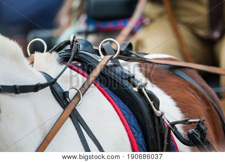 horse back with reins in carriage details