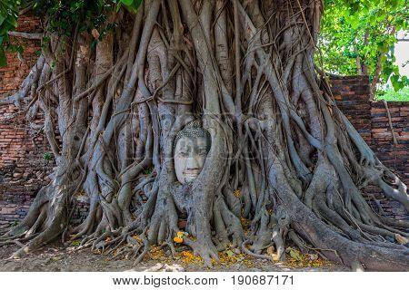 Buddha Head In Banyan Tree Roots