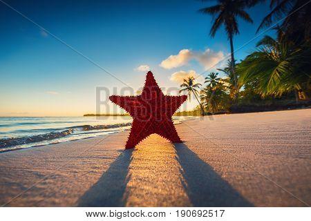Starfish on the beach at sunrise. Punta Cana.
