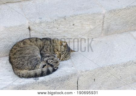 Cat Sleeping In A Street Over Antique Steps Stones