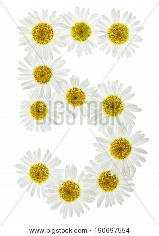 Arabic Numeral 5, Five, From White Flowers Of Chamomile, Isolated On White Background