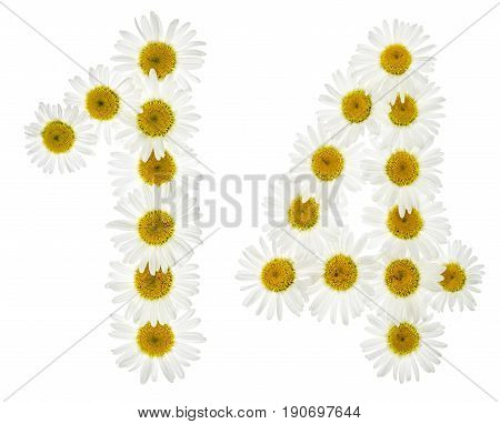 Arabic Numeral 14, Fourteen, From White Flowers Of Chamomile, Isolated On White Background