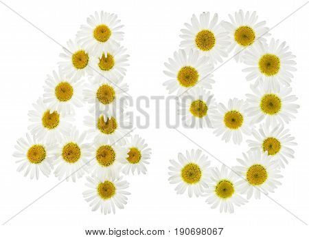 Arabic Numeral 49, Forty Nine, From White Flowers Of Chamomile, Isolated On White Background