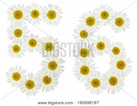 Arabic Numeral 56, Fifty Six, From White Flowers Of Chamomile, Isolated On White Background