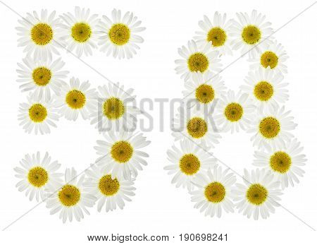Arabic Numeral 58, Fifty Eight, From White Flowers Of Chamomile, Isolated On White Background