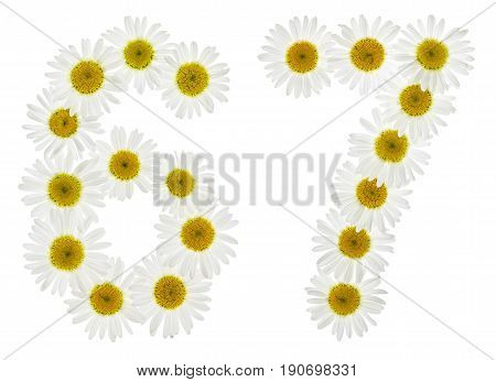 Arabic Numeral 67, Sixty Seven, From White Flowers Of Chamomile, Isolated On White Background