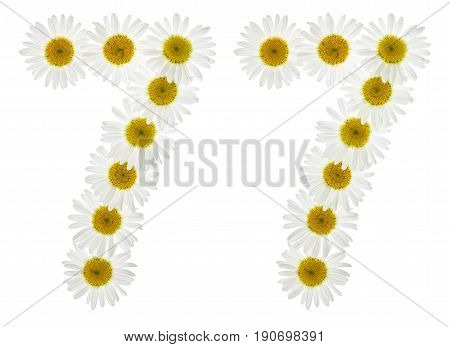 Arabic Numeral 77, Seventy Seven, From White Flowers Of Chamomile, Isolated On White Background