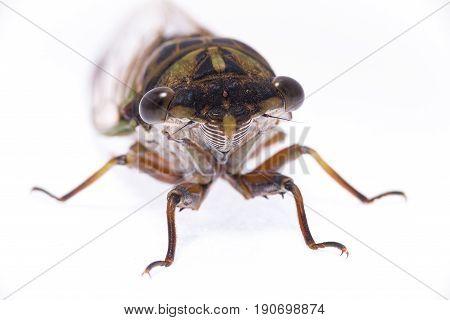 High key photo of an East Texas cicada