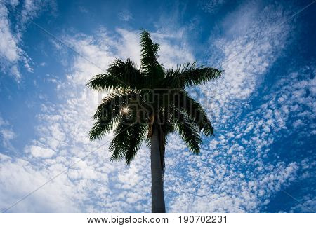 Sunlight shining through palm fronds creating a starburst effect with a blue and white sky in the background