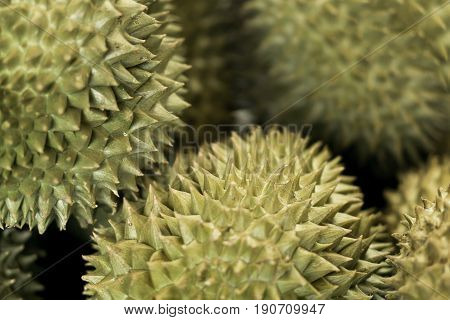 Thorn surface of Mon Thong Durian King of Tropical Fruits in Thailand.