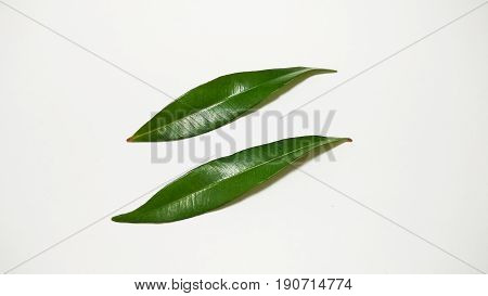 leaf tree photo element stock close up