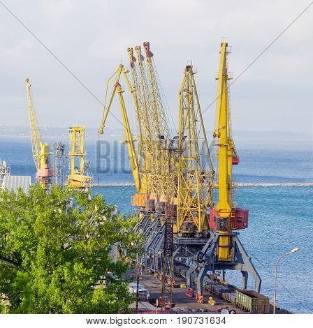 Group of the different harbor cranes on the quay of the sea cargo port against the background of the sea bay