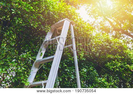 Pruning gardening high tree concept. ladder cut and rip prun branch home garden.