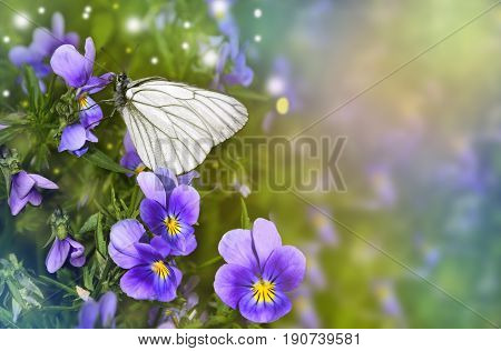 White butterfly (Aporia crataegi) close up sits on a lilac violet flowers - beautiful romantic floral summer border with space for text