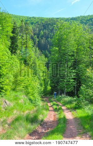 Dirt road in the mountains between the trees. Mountain landscape with old road