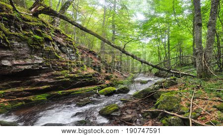 Beautiful view on mountain river with fallen tree, Old Mountain, Serbia. Wild river with a lot of cascade and natural bridge