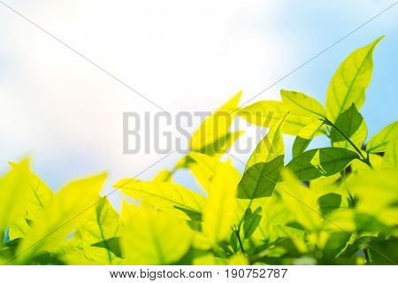 Green leaf and natural background concept - Beautiful natural green leaf and blue sky with flare light effect background and copyspace