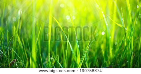 Grass. Fresh green spring grass with dew drops background, closeup. Sun. Soft Focus. Abstract Nature spring Background, springtime. Environment concept, lawn