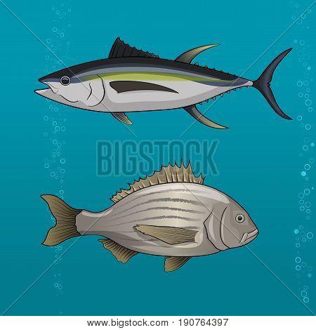 Common tune and seabream, dorado, cartoon Vector illustration for artwork in small sizes.