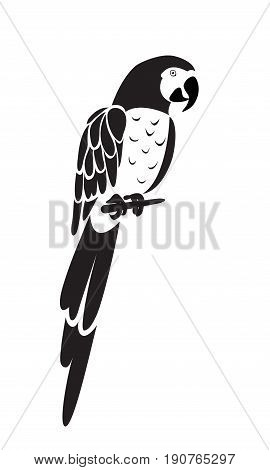 Parrot icon isolated on white background. Vector