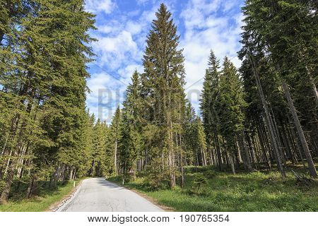 Forest Of Triglav National Park Inside Bohinj Valley Near Bled In Julian Alps, Slovenia, Europe.