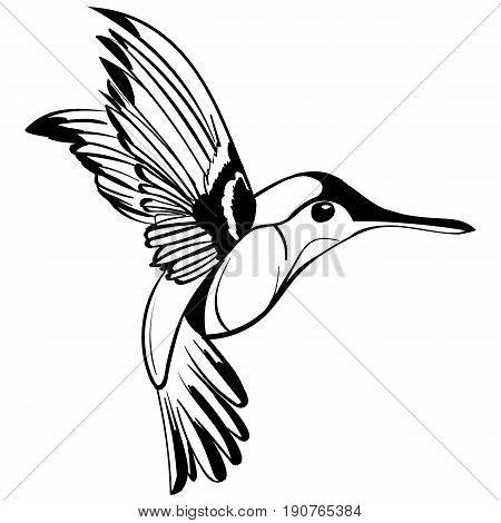 Hand Drawn vector illustration isolated on white background. Sketch for tattoo. Colibri drawing.