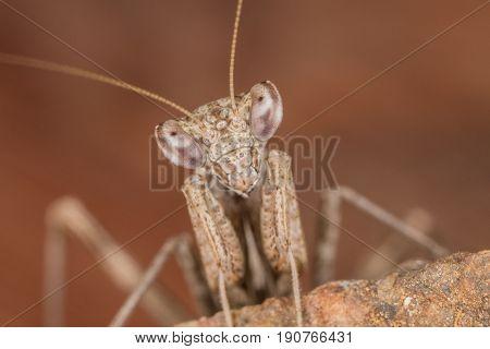A Mantis Portrait