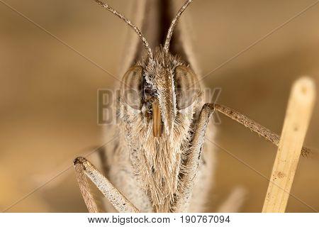 A Closeup Of A Beautiful Butterfly