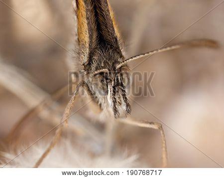 A closeup portrait of a beautiful butterfly