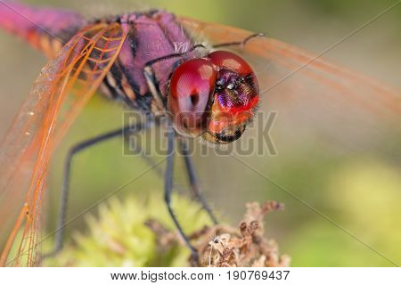 A Close-up Of A Beautiful Dragonfly
