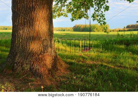 A swing on a tree in a village in the summer. Sunny day of green nature outdoor swing on big tree on village
