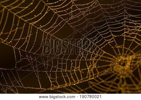 Wet Spider Web Macro
