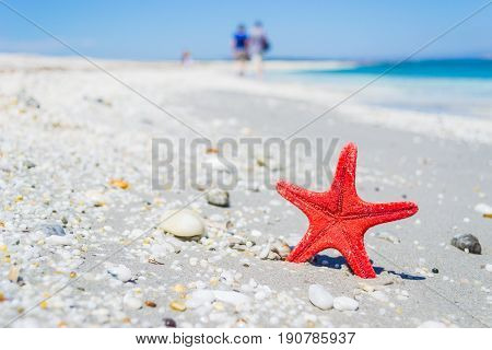 a red star fish on the grey sand