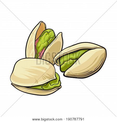 Group of pistachio nuts, shelled and unshelled, sketch style vector illustration isolated on white background. Realistic hand drawing of pistachio nuts