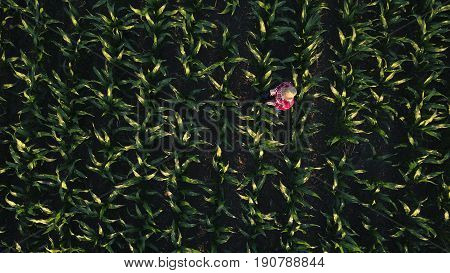 Aerial view of female farmer with digital tablet computer in cultivated agricultural maize crop corn field drone pov