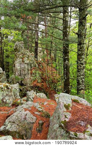 rock formations along butte of castle mound pine forest in jackson county wisconsin