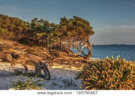 Vegetation by the sea in Alghero at sunset. Sardinia Italy