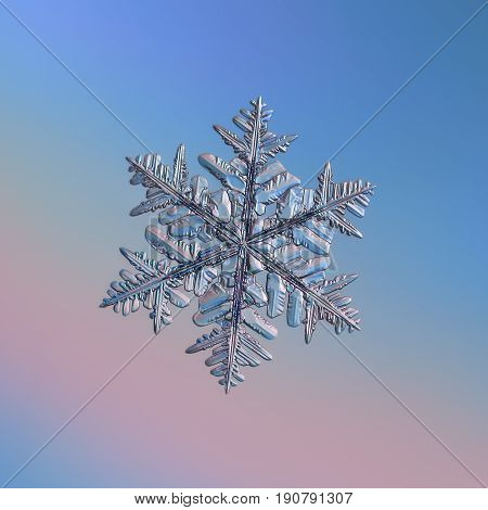 Real snowflake macro photo: big stellar dendrite snow crystal with complex structure, hexagonal symmetry, long, elegant arms with lots of side branches and glossy relief surface.